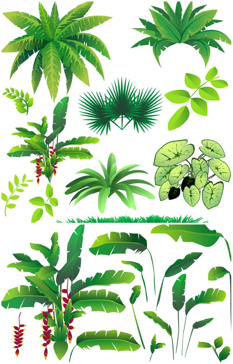 Jungle clipart 1