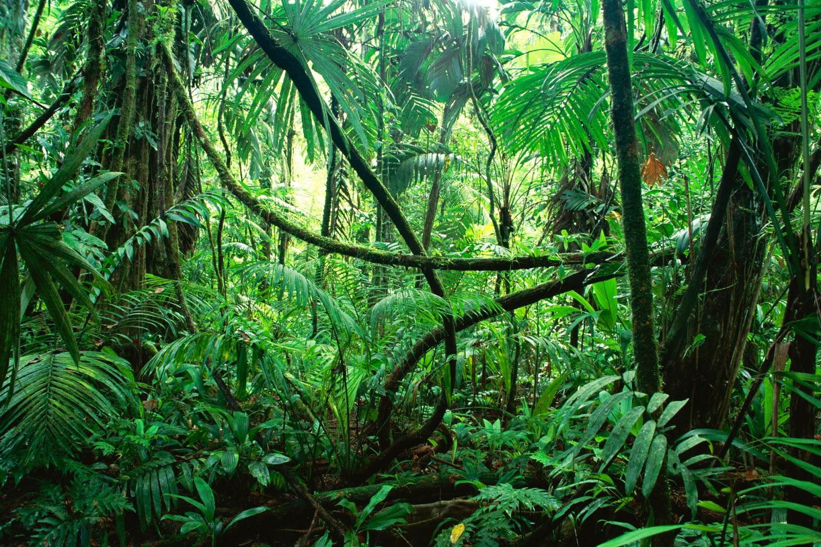 Jungle clipart 3