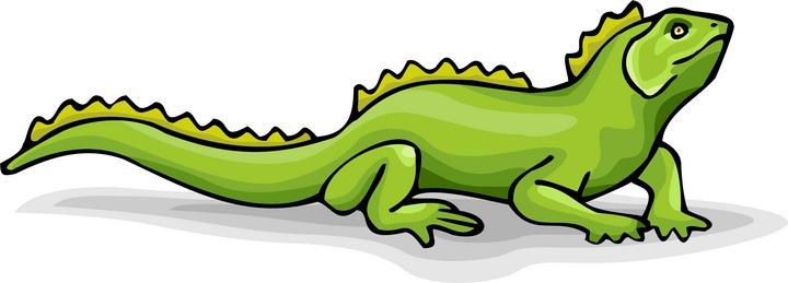 Lizard clipart 11