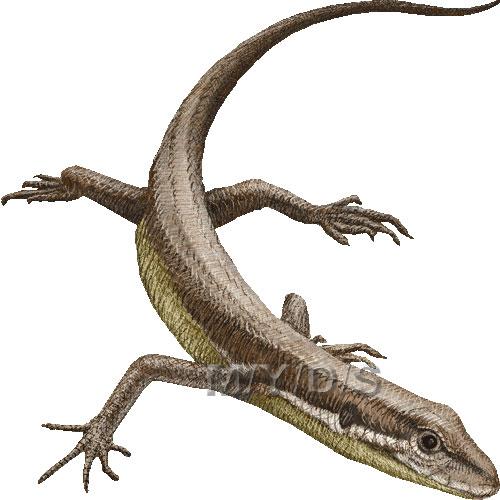 Lizard clipart 3 2