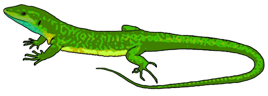Lizard clipart images