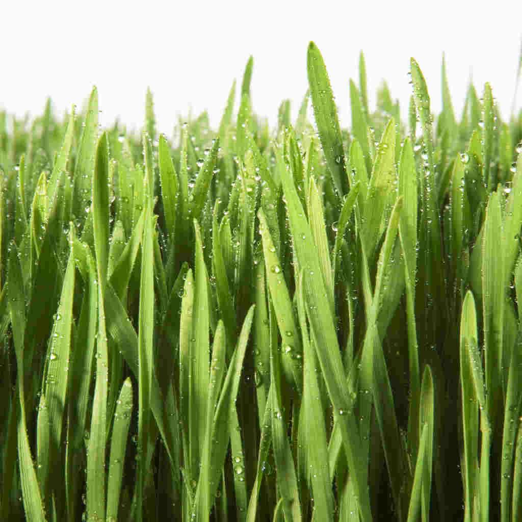 Cliparti1 grass clipart image