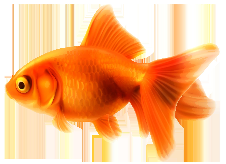 Fancy goldfish clipart logo more