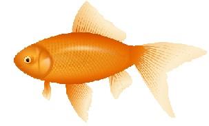 Free goldfish clipart 2