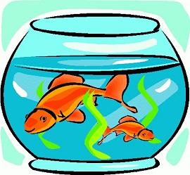 Free goldfish clipart 3
