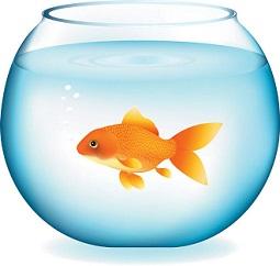 Free goldfish clipart