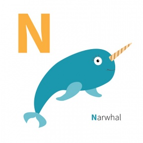 Free narwhal clipart 7