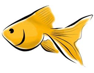 Goldfish clipart 10