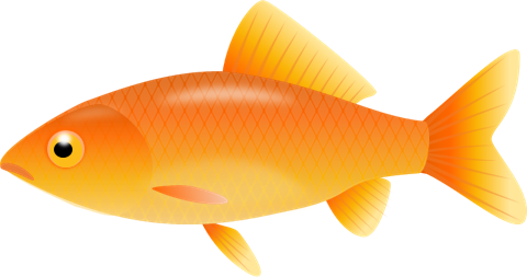 Goldfish clipart 16