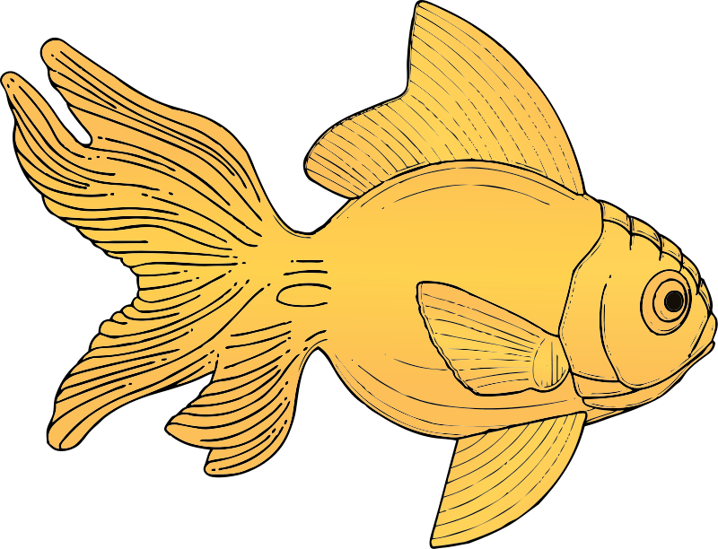 Goldfish clipart 18