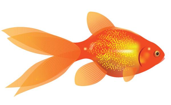 Goldfish clipart 19