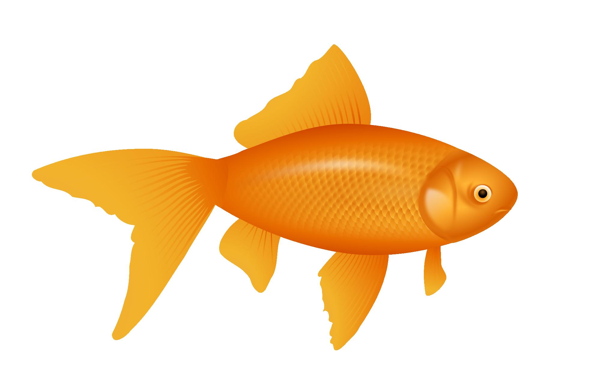 Goldfish clipart 5