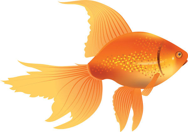 Goldfish clipart free images 4