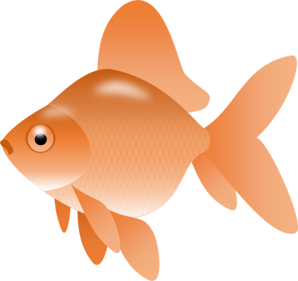 Goldfish gold fish clip art synkee