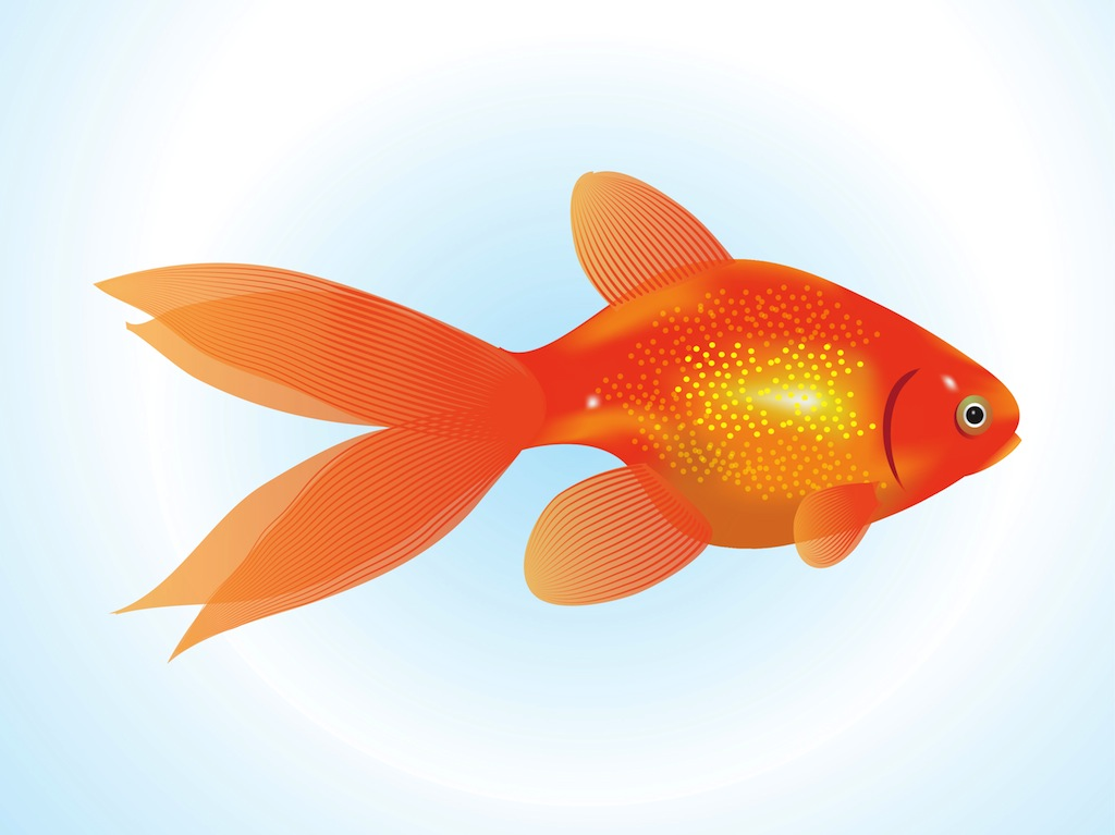 Goldfish gold fish clipart cliparts and others art inspiration