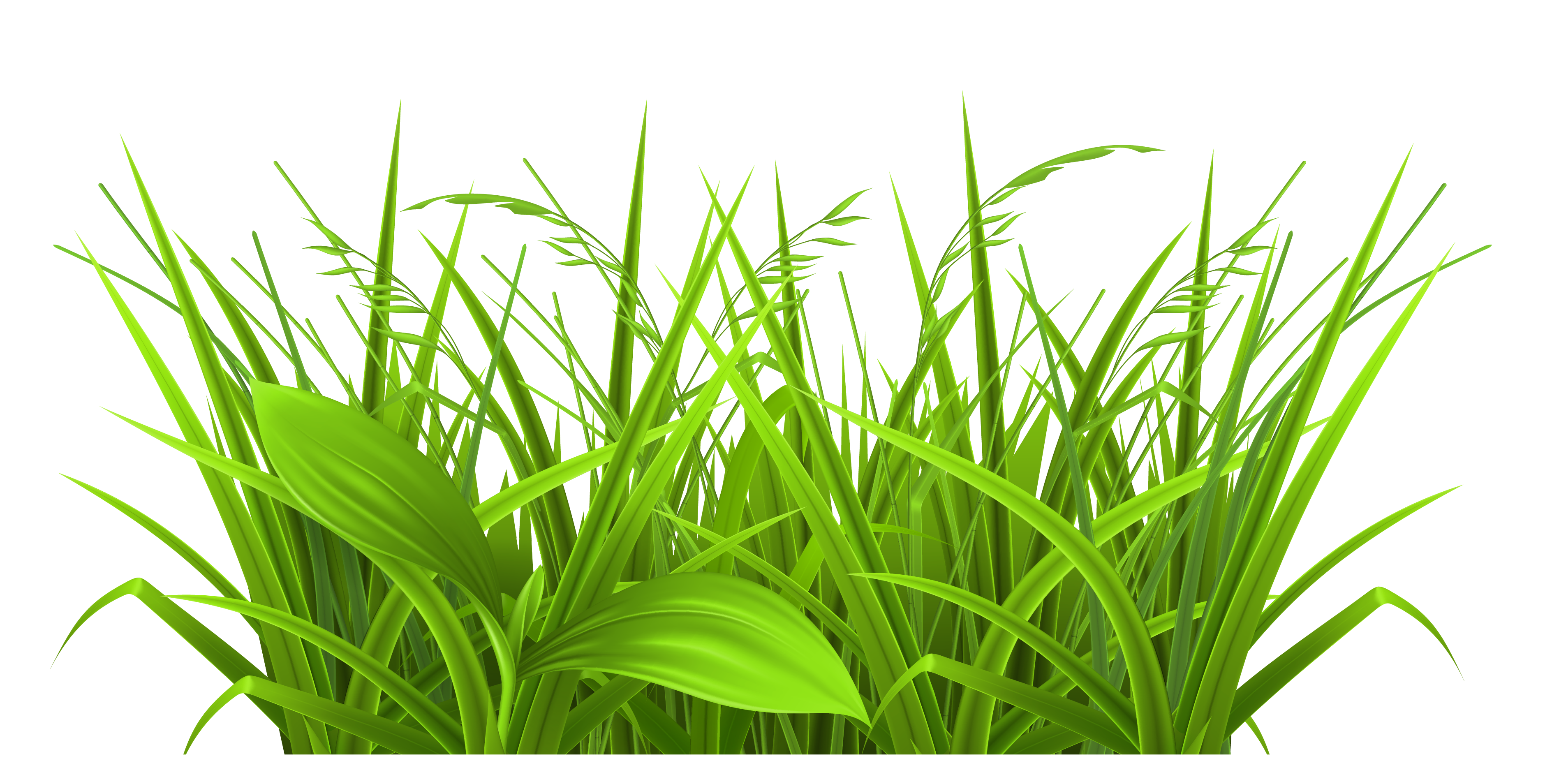 Grass clip art free clipart images 2 3