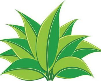 Grass clip art images free clipart 5