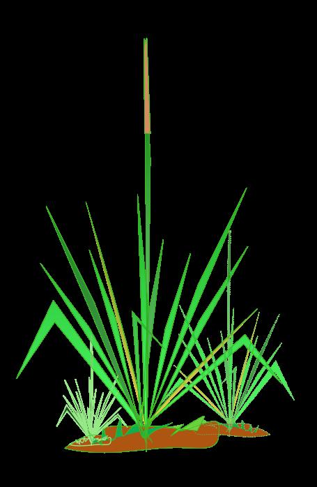 Grass clipart 16