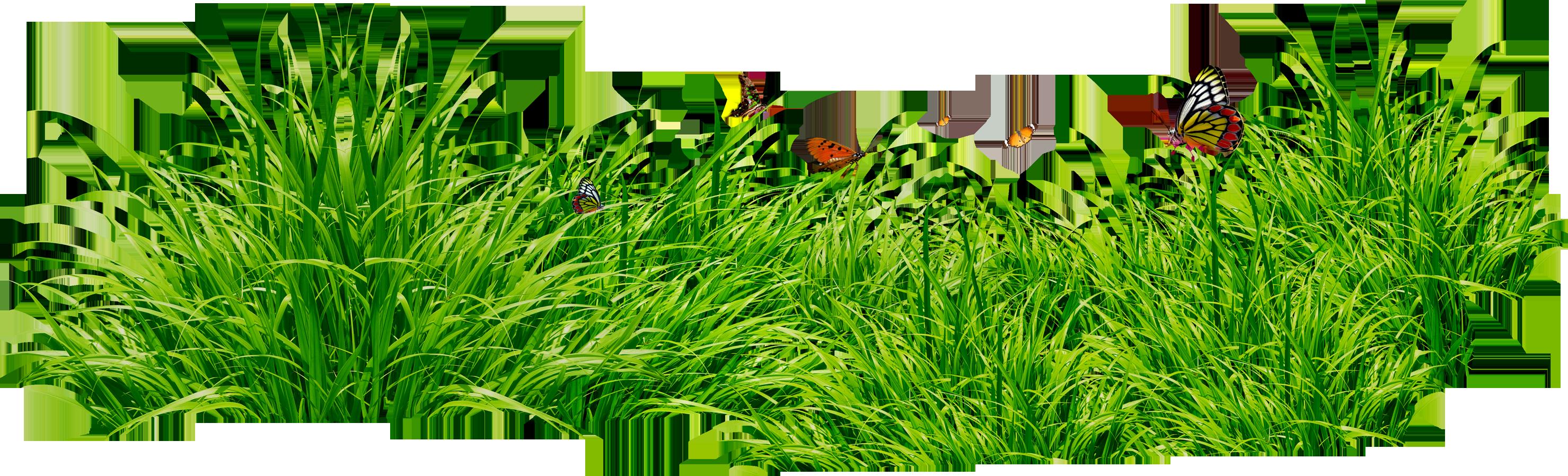 Grass clipart 18
