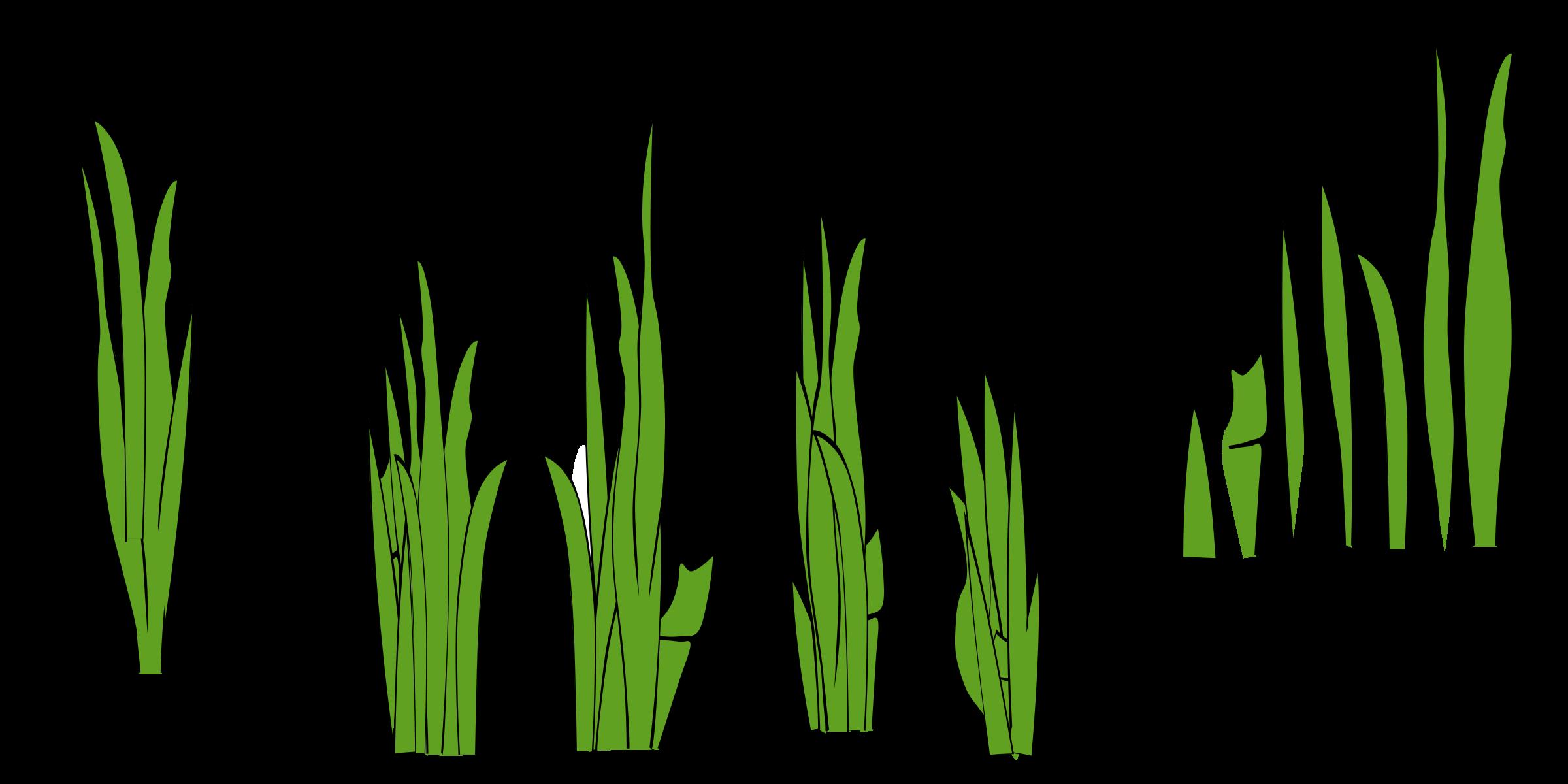 Grass clipart 2 3