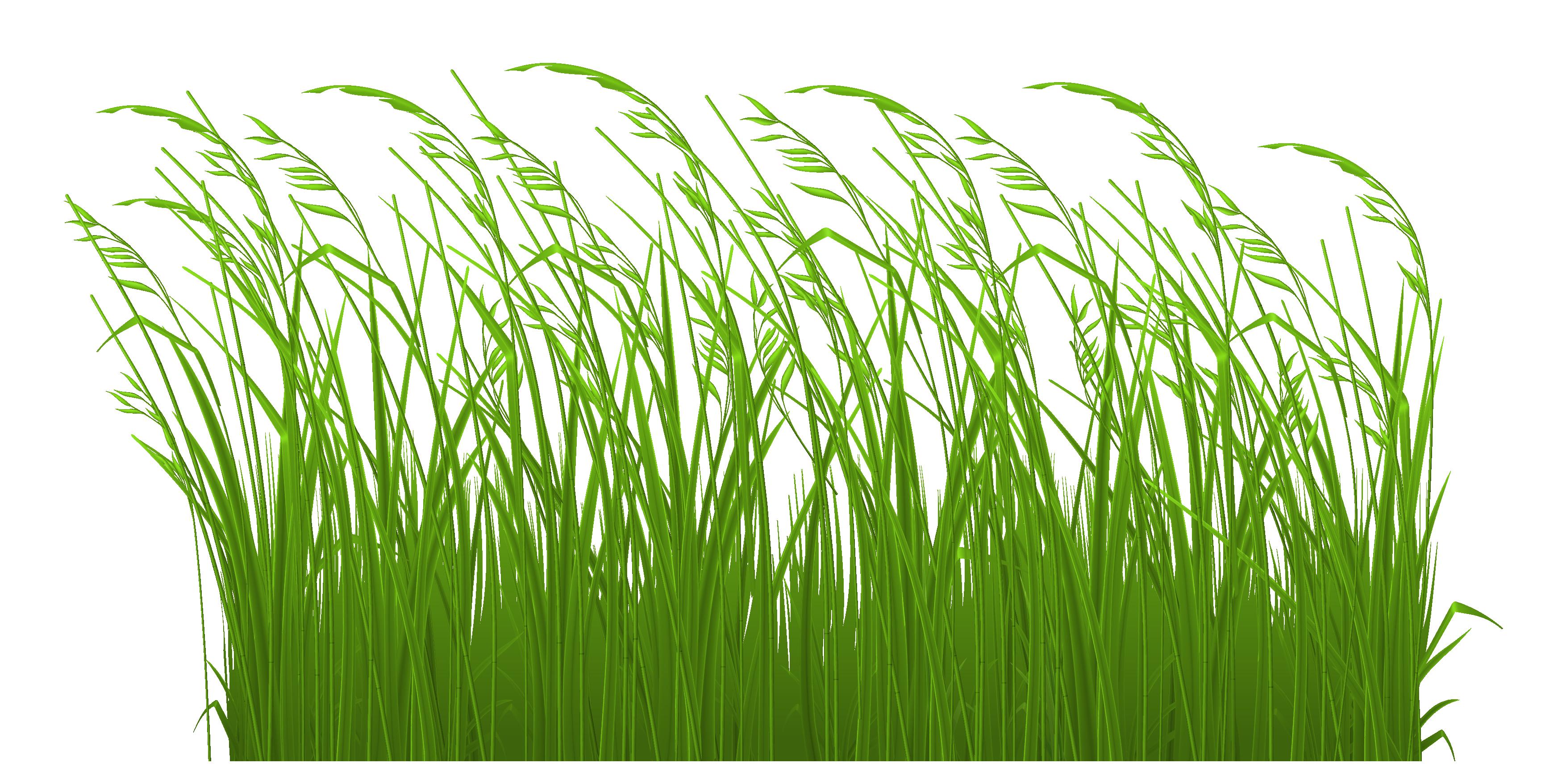 Grass clipart 5
