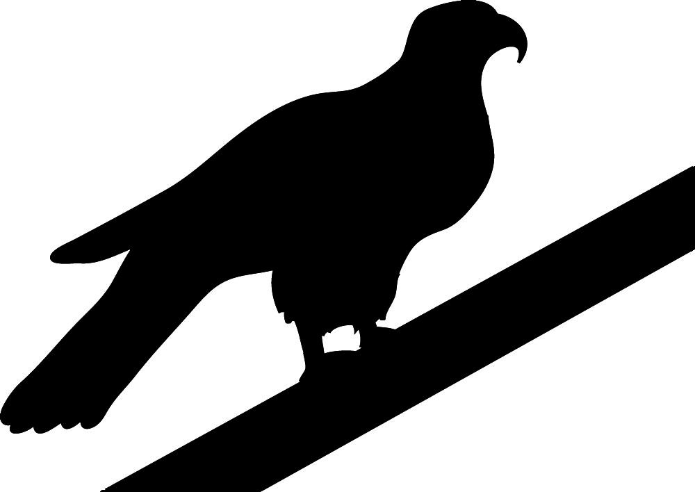 Hawk clip art clipart 2 clipart
