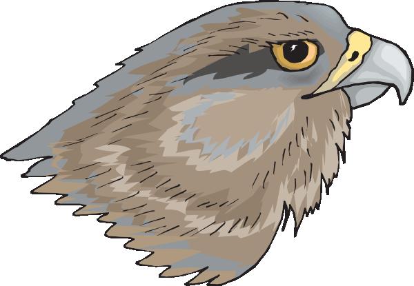 Hawk clip art clipart 3 3