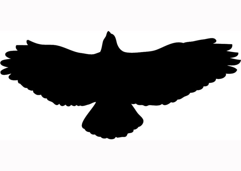 Hawk clipart 2