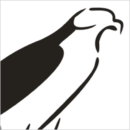 Hawk clipart free clip art images warhawks