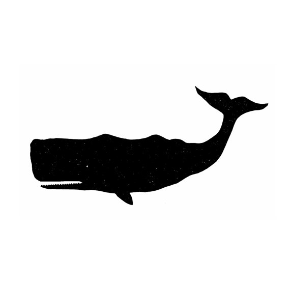 Narwhal clipart 5