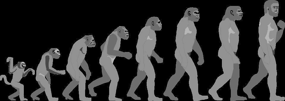 Evolution clip art images free clipart 9