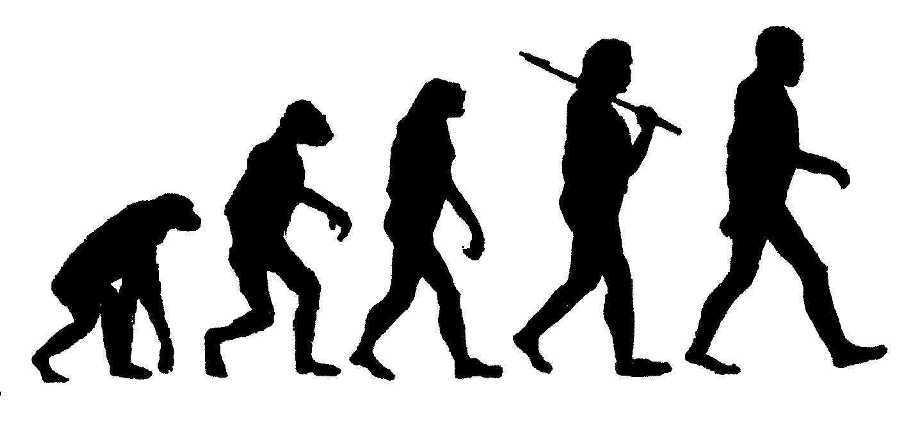 Evolution clip art images free clipart