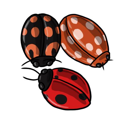 Free ladybug clip art 7