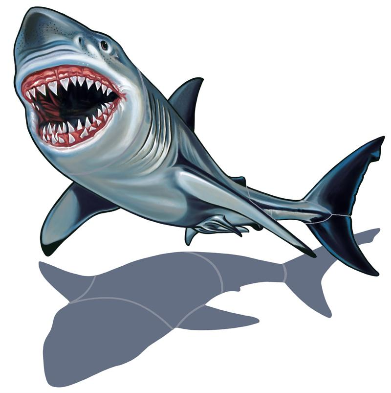 Great white shark clip art free clipart images 2