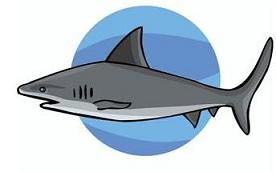 Great white shark clip art free clipart images