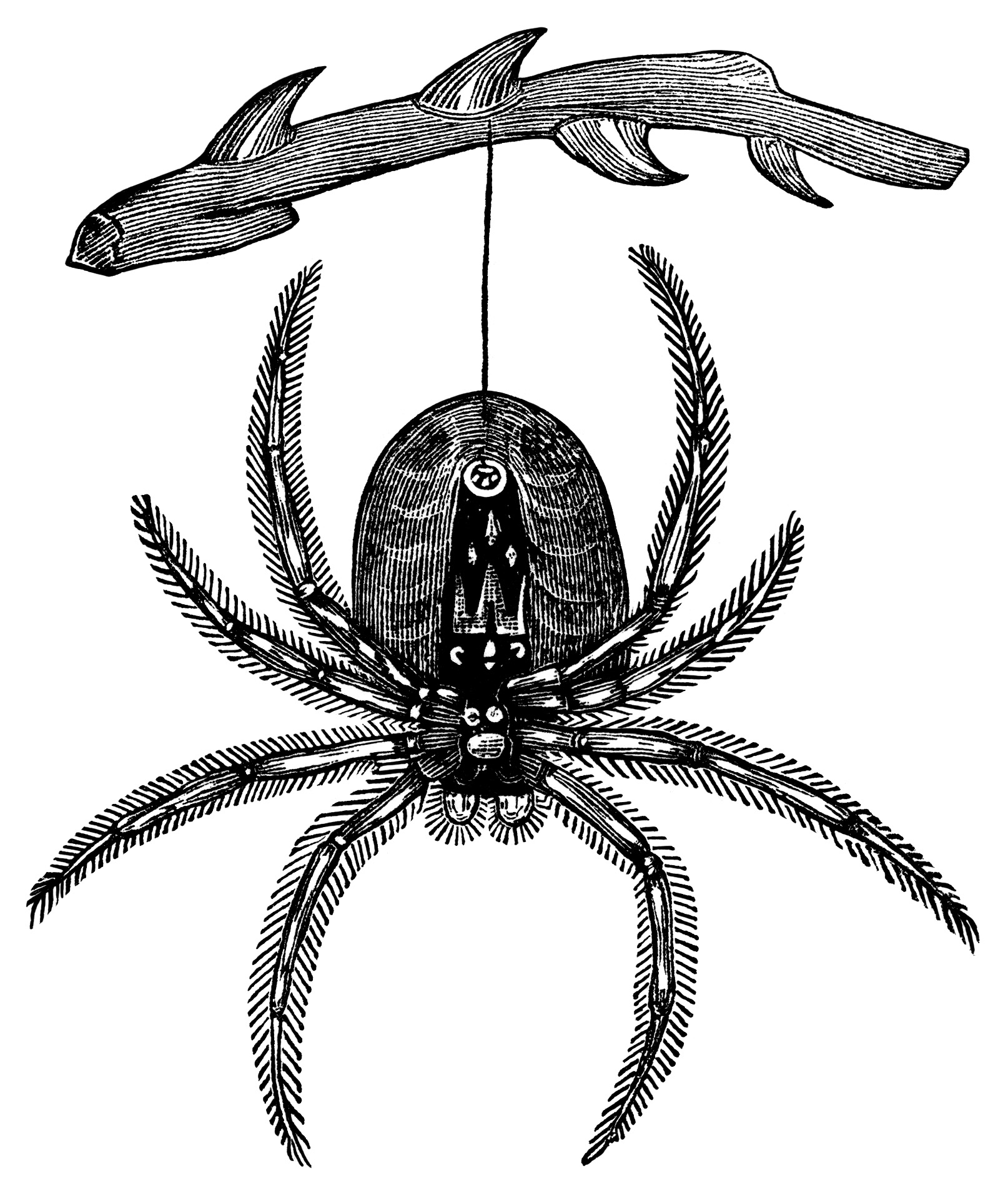 Halloween  black and white hanging spider free vintage halloween clip art black and white