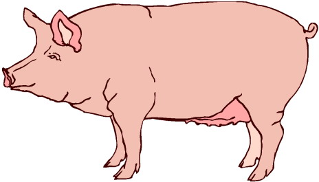 Image of pig clipart 7 clip art free vector clipartoons 2