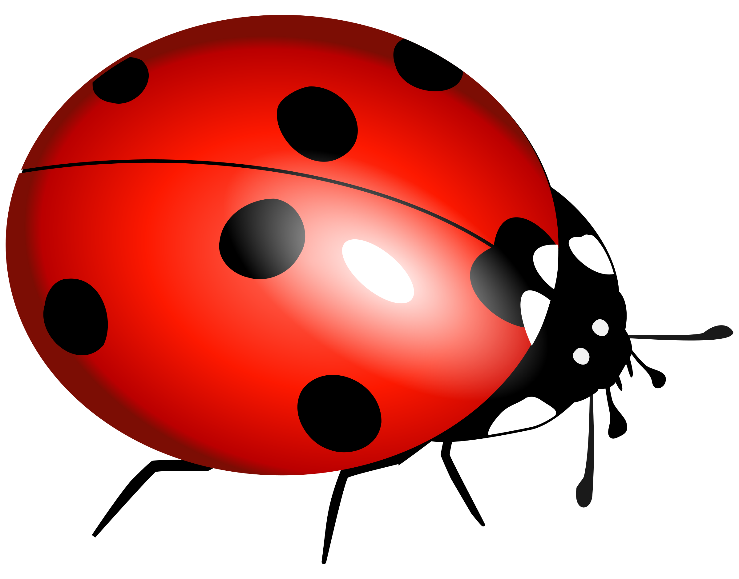 Ladybug download lady bug clipart clipartmonk free clip art images