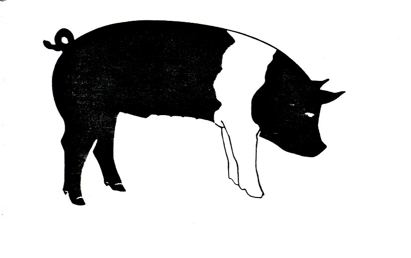 Pig clip art 4 pig clipart fans