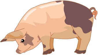 Pigs clip art 3