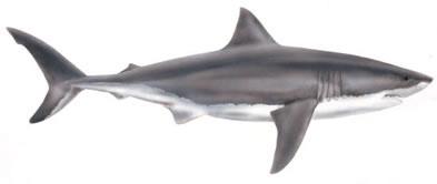 Shark clip art images free clipart 2 2