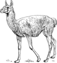 Clipart solution image llama