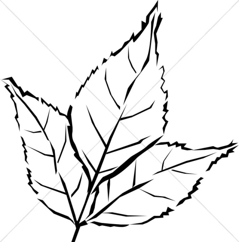 Leaf  black and white black and white oak leaf clipart