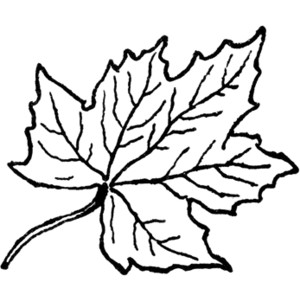 Leaf  black and white leaves black and white leaf clipart free images