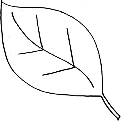 Leaf  black and white leaves clipart black and white schliferaward