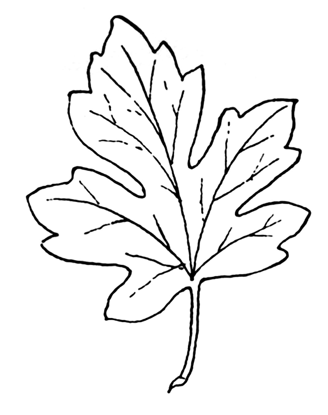 Leaf  black and white september leaves clipart black and white collection