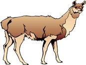 Llama clip art clipart