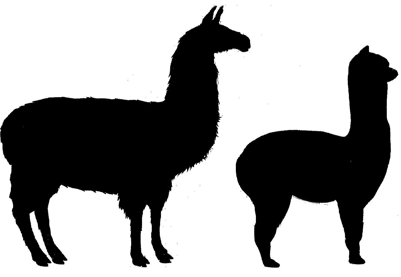 Llama clipart 3 2