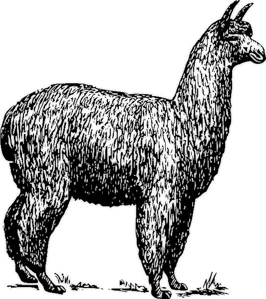 Llama clipart 3 3