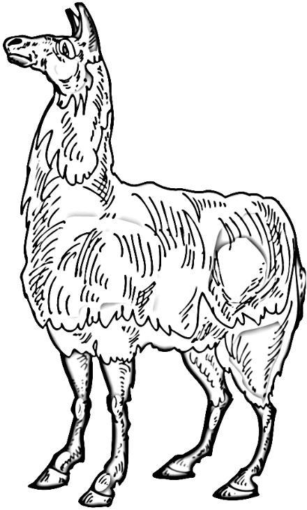 Llama clipart 6 image 2